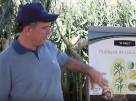 video 04 270x200 - Vantagens VTPRO3 – Importância da raiz – Parte III stress hídrico