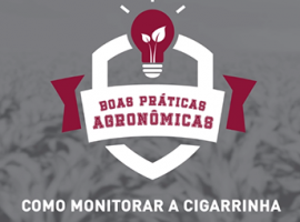 5 270x200 - MIP - Cigarrinha – Como monitorá-la?