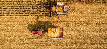 thumb colheita 371x170 - Colheita do milho no momento correto