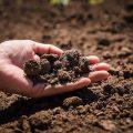Manejo de solo 2 120x120 - Manejo de solo para a alta produtividade do milho