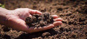 Manejo de solo 2 371x170 - Manejo de solo para a alta produtividade do milho
